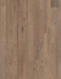 Ozols Royal pelēks, eļļots VAR1631
